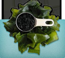 Kelp for Thyroid